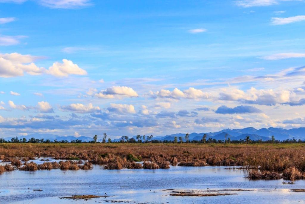 Thung Sam Roi Yot Freshwater Marsh